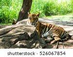 bengal tiger | Shutterstock . vector #526067854