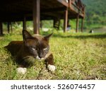 Stock photo an adorable black cat is sitting on the fresh green yard she s wearing white socks the background 526074457