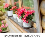 Red Flowers In Pots On The...