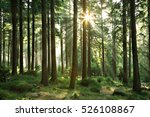 natural forest of spruce trees...   Shutterstock . vector #526108867