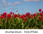 Tulips With A Typical Dutch...