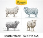 set of images   sheep in... | Shutterstock .eps vector #526245565
