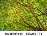 forest tree backgound | Shutterstock . vector #526258471