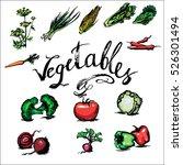 tomato  fennel  corn  cabbage ...   Shutterstock .eps vector #526301494