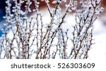 Abstract Frosted Twig With...