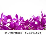 beautiful pink orchid on white... | Shutterstock . vector #526341595