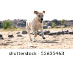 Stock photo happy dog play on the ground 52635463