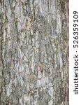 Small photo of Albizia lebbeck tree trunk texture background