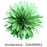 green flower on a white ... | Shutterstock . vector #526400851