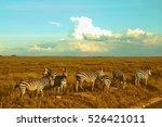 zebras serengeti kenya | Shutterstock . vector #526421011
