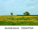 Dandelion Meadow And Trees