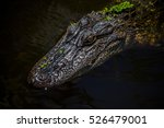 Small photo of Relaxed alligator