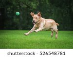 happy labrador retriever dog... | Shutterstock . vector #526548781