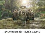 three owls over a bridge of... | Shutterstock . vector #526563247
