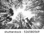night park in kiev beautiful... | Shutterstock . vector #526580569