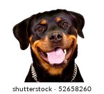 Stock photo portrait of rottweiler dog isolated on a white background 52658260