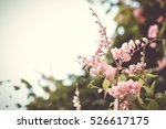 Stock photo wild flower with fresh blooming in the morning light season change and beautiful flora 526617175