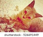 A Cat Plays Paper  Soft Focus...