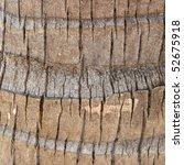 Coco Palm Detail Bark