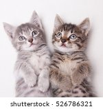 Stock photo two adorable kittens lying together looking above the camera on a white background 526786321
