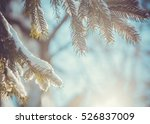 Fir Tree Covered With Snow...