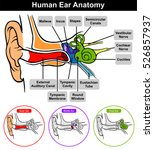 vector human ear anatomy with... | Shutterstock .eps vector #526857937