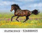 Bay Stallion Run Gallop On...