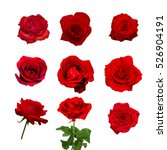Stock photo selection of beautiful red rose flower isolated on white background 526904191