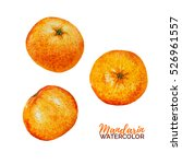 watercolor mandarine orange... | Shutterstock . vector #526961557