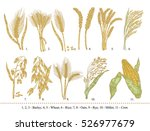cereal set. hand drawn barley ... | Shutterstock .eps vector #526977679