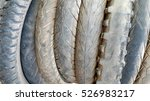 old tire isolated | Shutterstock . vector #526983217