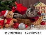 Christmas Gifts And Kitten...