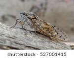 A Close Up Of A Cicada On A...