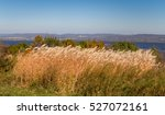 swaying field of feather reed... | Shutterstock . vector #527072161