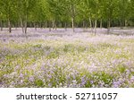 Flower Field And Woods In...