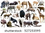 set of different african... | Shutterstock . vector #527253595