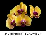 close up of yellow pink orchid... | Shutterstock . vector #527294689
