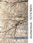 winter landscape. frost frost... | Shutterstock . vector #527478691