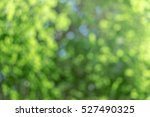 Green Bokeh Background With...