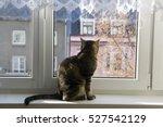 Cat Sitting On The Windowsill...