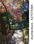 japanese maples  acer palmatum  ... | Shutterstock . vector #527575585