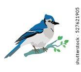 blue jay vector. birds wildlife ... | Shutterstock .eps vector #527621905