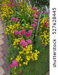 Small photo of Detail of Achillea millefolium and Coreopsis in a colourful border