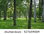 a forest with a gazebo | Shutterstock . vector #527659009