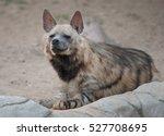 brown hyena resting | Shutterstock . vector #527708695