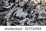 Small photo of The remains of burned leaves. Burn leaf with ashes. Gray background.
