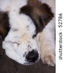 joey  new proprietor of manfred'... | Shutterstock . vector #52786