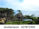 The Lone Cypress Tree Along The ...
