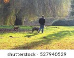 Stock photo unidentified man walking his dogs with plastic bag dogs in chain they walking in the park during 527940529