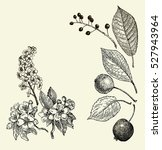 Vintage Graphic Vector Leaves ...